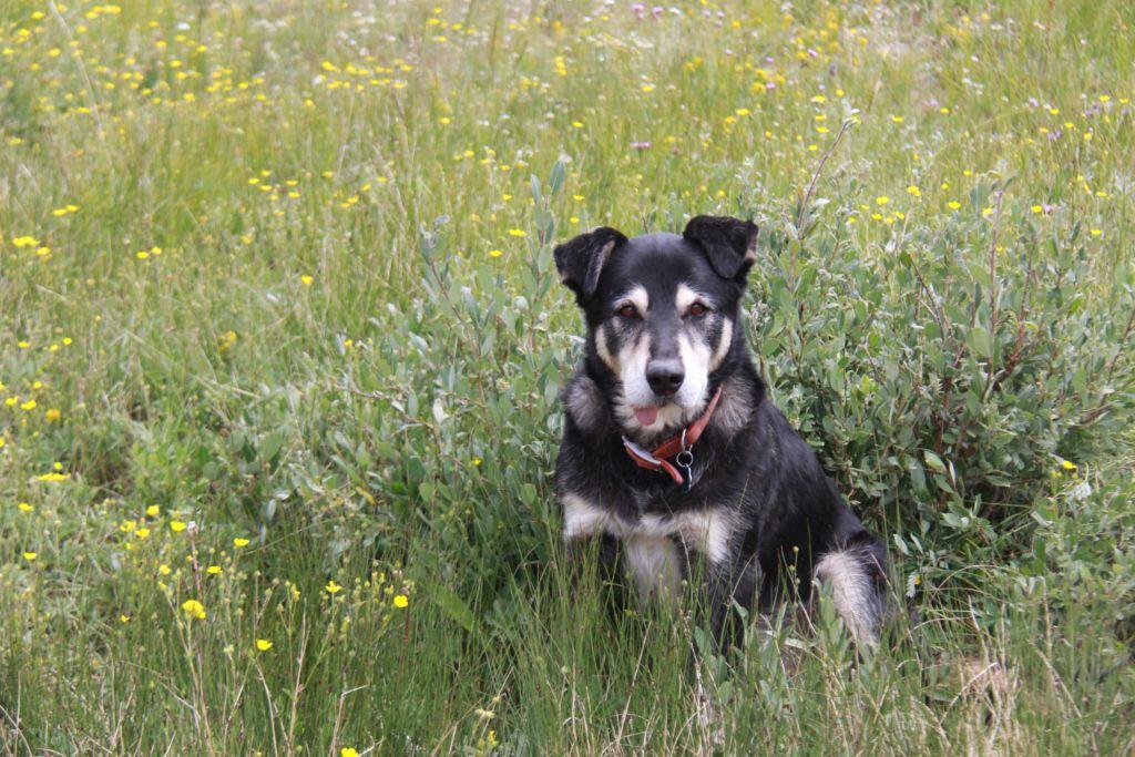 essay on faithful dog