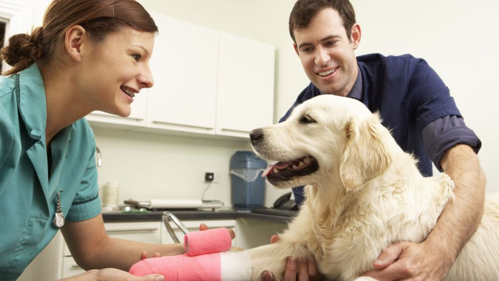 becoming a vet Healthcare careers are a hot ticket these days—but that's not just human healthcare the veterinary industry is also growing, with job openings in clinics and facilities that take care of our furry (and aquatic/scaly/feathered) friends.