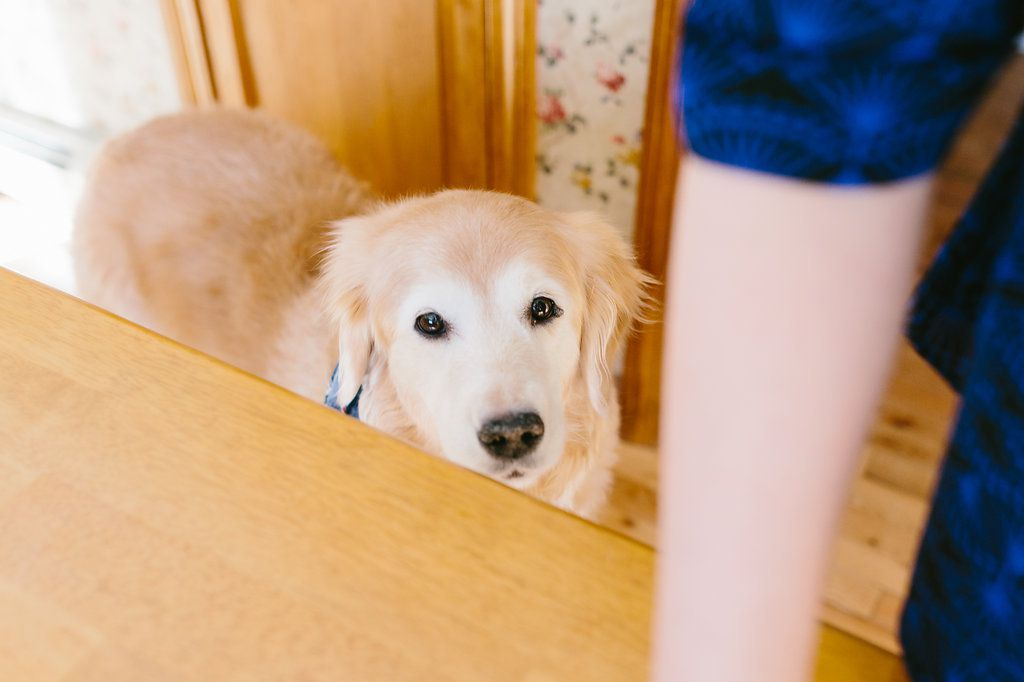 Best Tasting Homemade Dog Treats