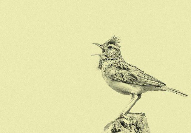 night owls vs morning larks essay
