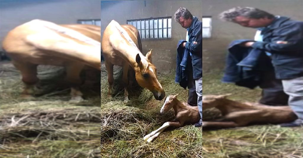 Pregnant Horse Gives Birth To Twin Miracle Foals